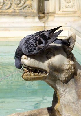 05_pigeon_wolf-sculpture-fountain.jpg