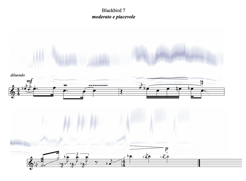 HEADER IMAGE_blackbird_song_notation+sonogram_portrait.jpg